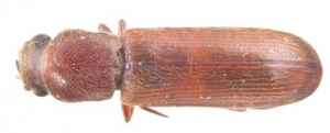 detail-woodbeetle