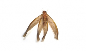 feature-termite-5