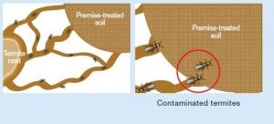 material-termite-3
