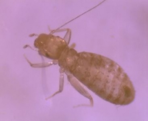 overview-lice