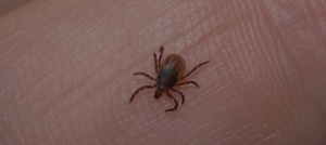 Green Pest Management-Tick
