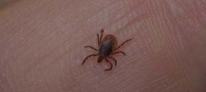 Green Pest Management-Tick