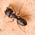 Johnson Group Ant Control