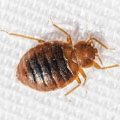 Johnson Group Bed Bug Control