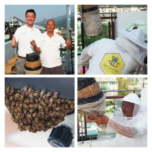 Found a beehive? Contact Johnson Group to relocate the bees to a new home