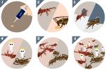 SafePRO® Cockroach Bait Gel & Ant Gel