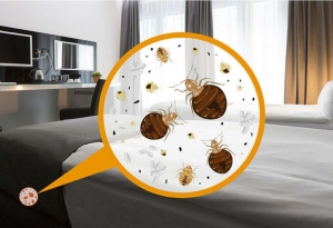 Johnson Group provides bed bug control service and product