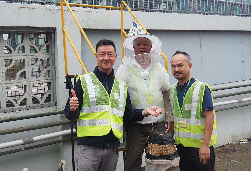 花了近3小時, 廣叔成功將數萬隻蜜蜂收集