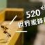 """蜂蜂 """"我愛你520""""「世界蜜蜂日」"""