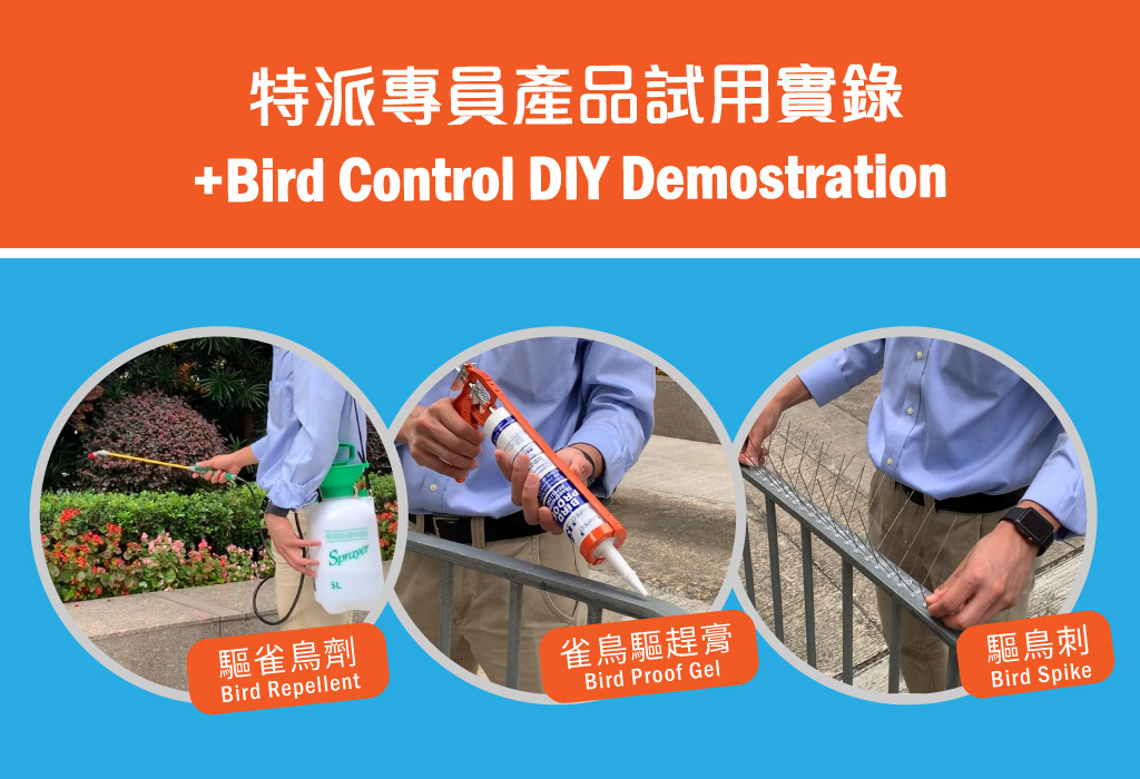 +Bird Control DIY Demostration
