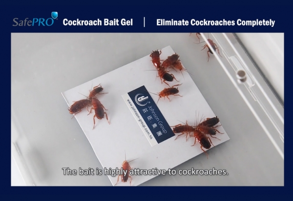 Kill Cockroaches Without Pesticide Spray
