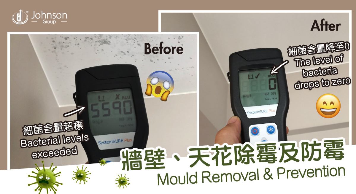 Mould Removal & Prevention