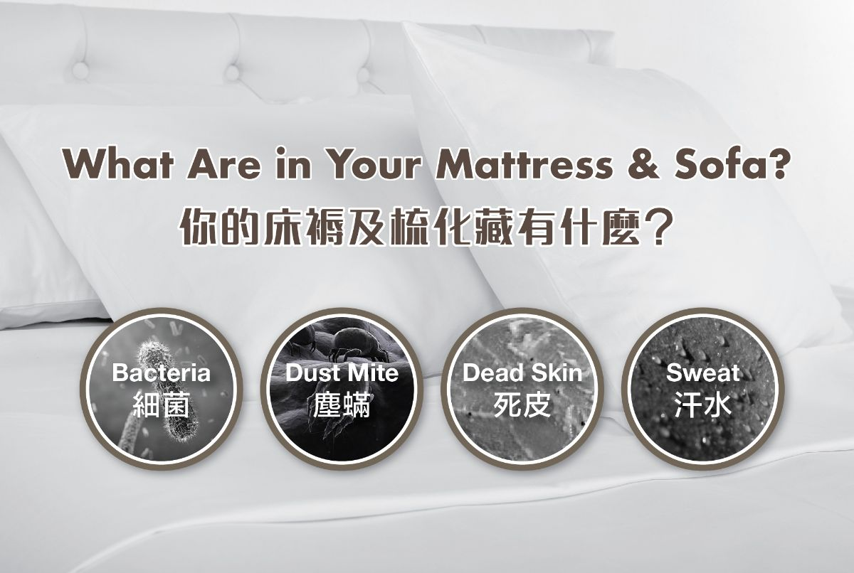 What are in your mattress and sofa